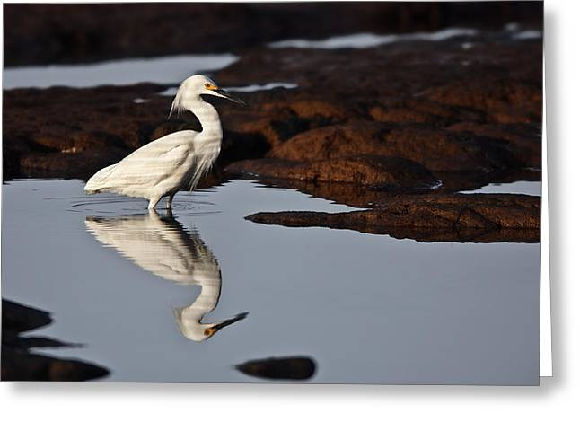 Greeting Card featuring the photograph Egret In Tide Pool  Mg_9631 by David Orias