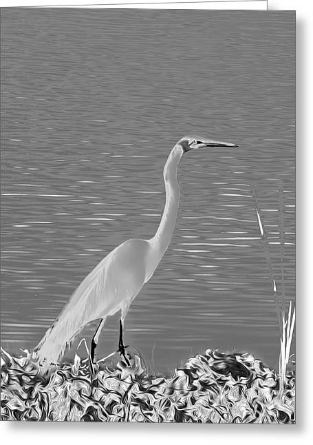 Greeting Card featuring the photograph Egret In White Satin by Frank Bright