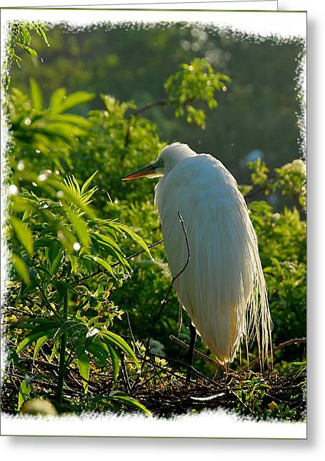 Egret Morning Greeting Card by Wynn Davis-Shanks