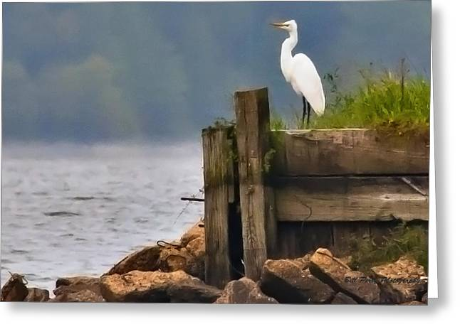 Egret On Dock Greeting Card by Bill Perry