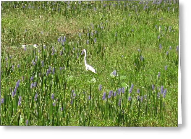Egret On The Lake Greeting Card