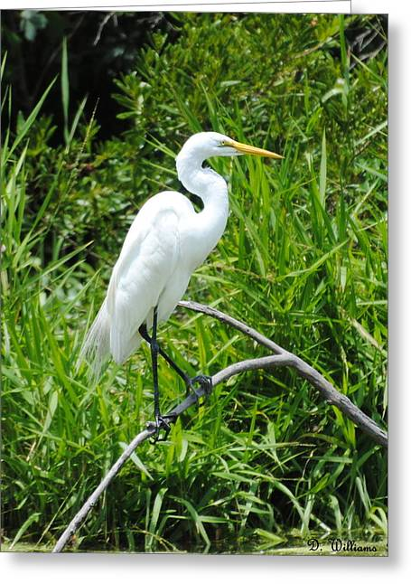 Egret Perching On Branch Greeting Card