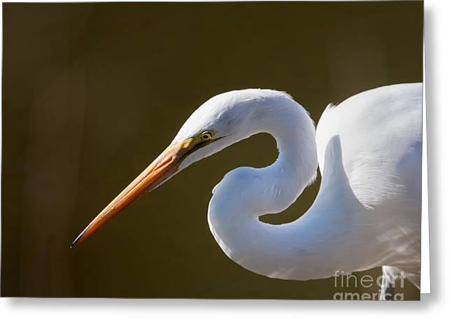 Egret Portrait-2 Greeting Card