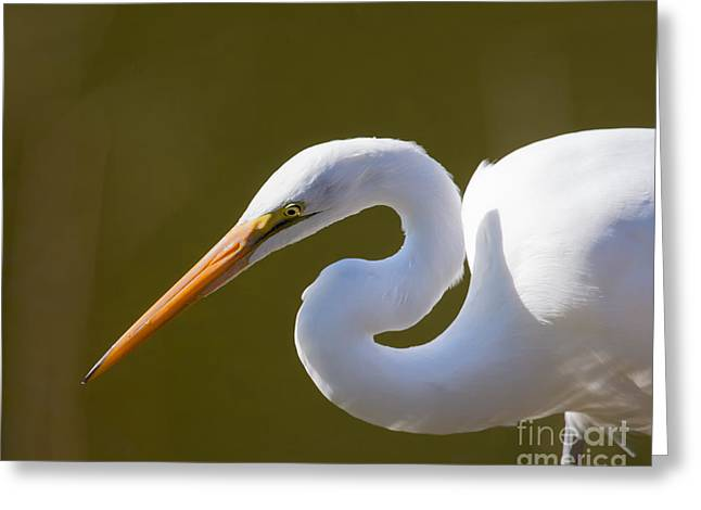Egret Portrait Greeting Card by Dale Nelson