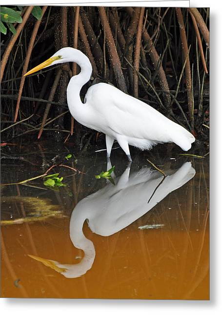 Egret Reflected In Orange Waters Greeting Card