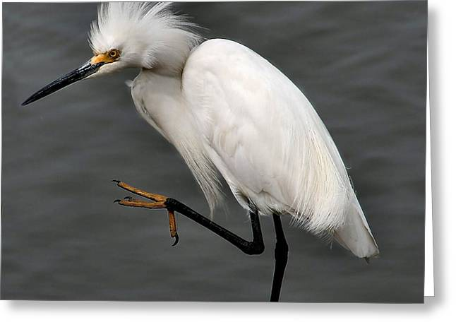 Egret Greeting Card by Roger Becker