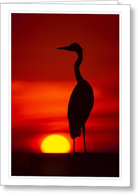 egret silhouette ver 2 photograph by larry mulvehill