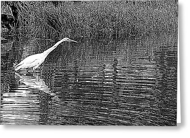 Egret Stalker Greeting Card