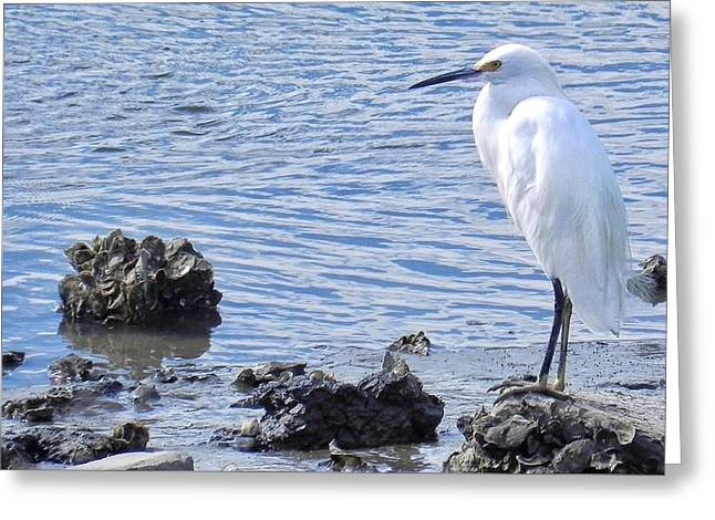 Egret Standing Perfectly Still Greeting Card
