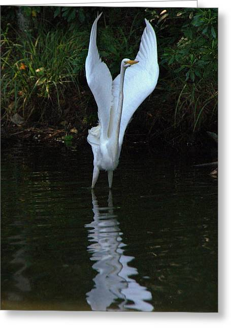 Greeting Card featuring the photograph Egret Take Off by Charlotte Schafer