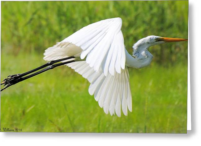 Egret Takes Flight Greeting Card