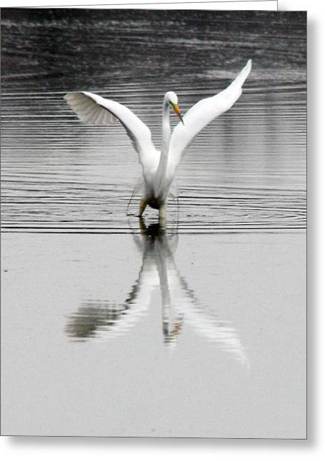 Egret Greeting Card by Valerie Wolf