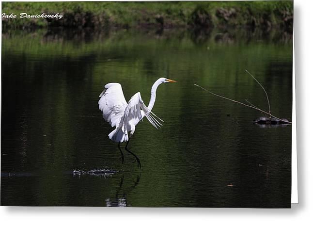 Egret Water Ballet Greeting Card by Jake Danishevsky