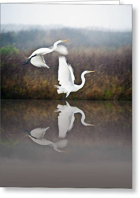 Egrets In The Fog Greeting Card by John Collins