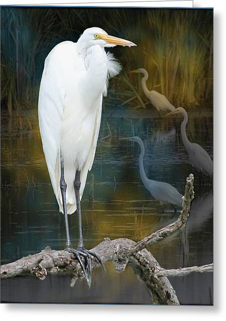 Egrets Greeting Card by John Kunze