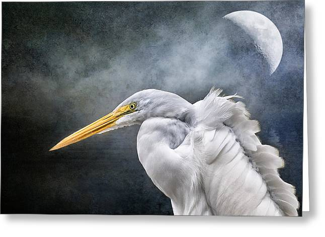 Greeting Card featuring the photograph Egret's Moon by Brian Tarr