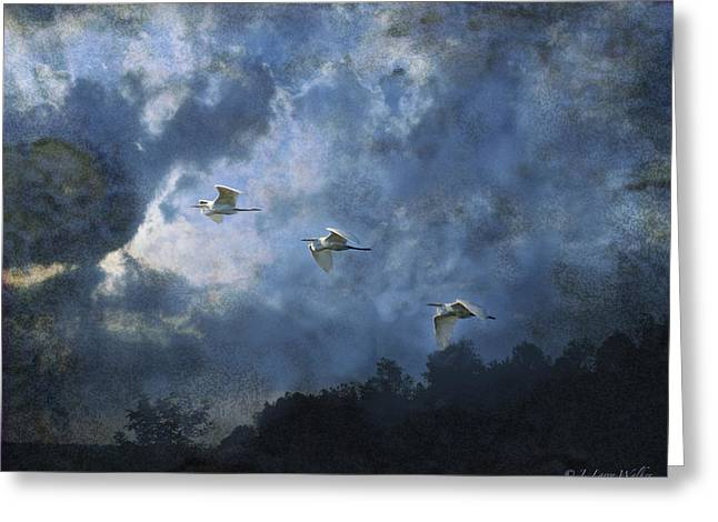 Egrets Morning Fly Greeting Card