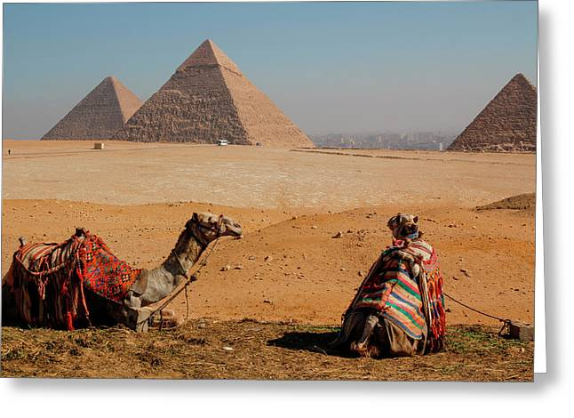Egypt, Cairo Giza Two Camels In Front Greeting Card