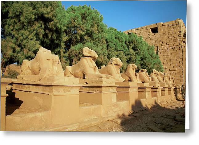 Egypt, Luxor, Avenue Of Sphinxes, Ram Greeting Card