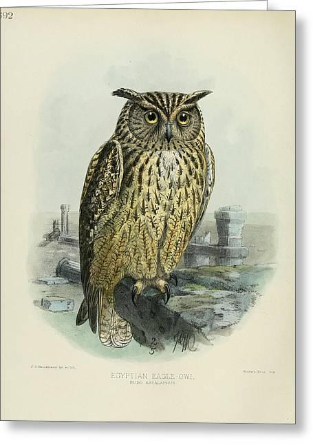 Egyption Eagle Owl Greeting Card by Rob Dreyer