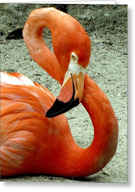 Figure Eight Flamingo Greeting Card