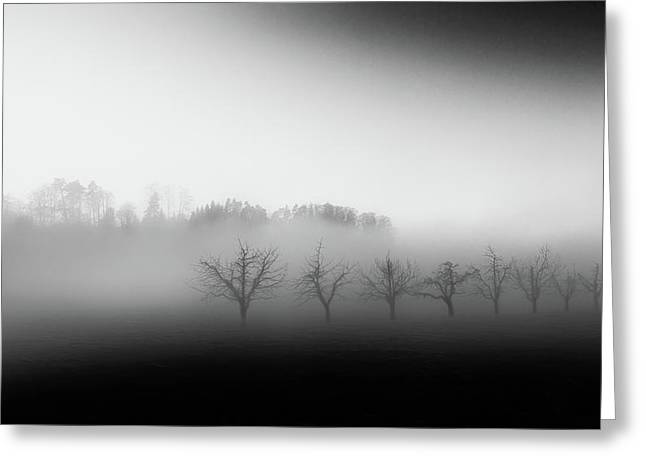 Eight Trees In The Mist Greeting Card