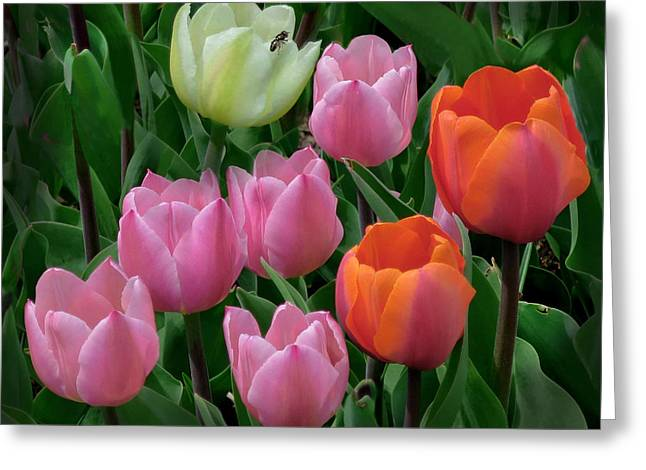 Eight Tulips And One Bee Greeting Card