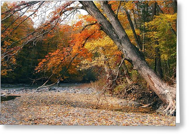 Eighteen Mile Creek Greeting Card