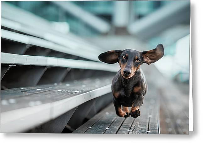 Ein Kleiner Hund La?uft Durch Die Welt.... Greeting Card