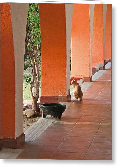 El Gato Greeting Card by Marcia Socolik