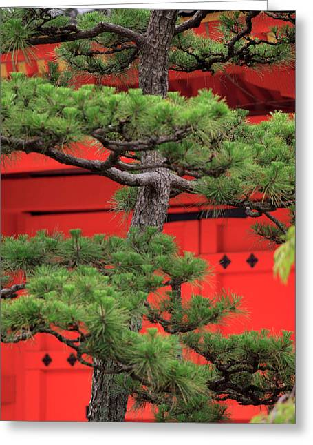 Elaborately Sculpted Pine Trees Greeting Card by Paul Dymond