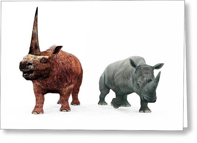 Elasmotherium And Rhino Compared Greeting Card