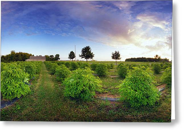 Elderberry Field, Quebec, Canada Greeting Card by Panoramic Images
