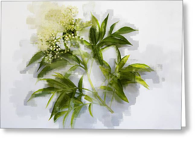 Greeting Card featuring the photograph Elderberry  by Linde Townsend