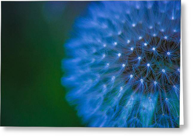 Electric Blue Greeting Card by Martin Newman