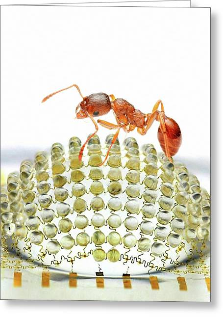 Electronic Compound Eye With Ant Greeting Card
