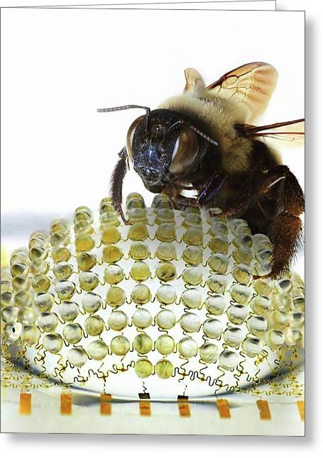 Electronic Compound Eye With Bee Greeting Card by Professor John Rogers, University Of Illinois