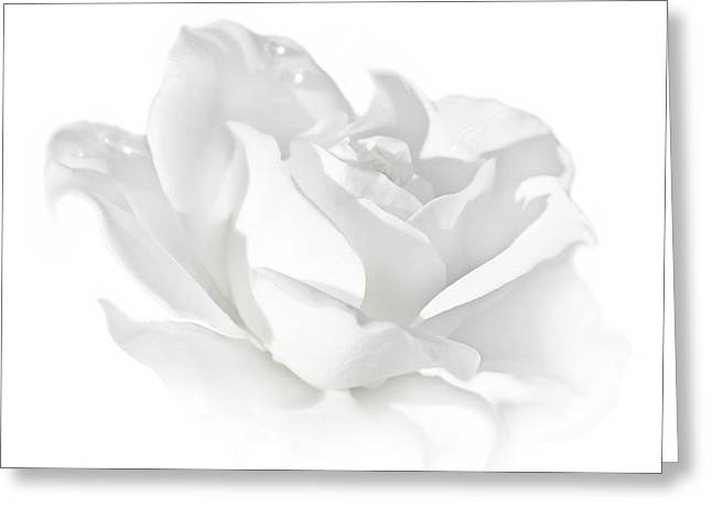 Elegance White Rose Flower Greeting Card
