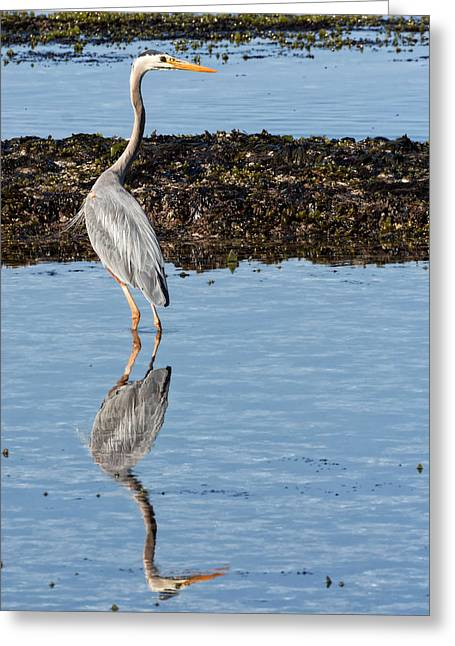 Elegant Heron Greeting Card