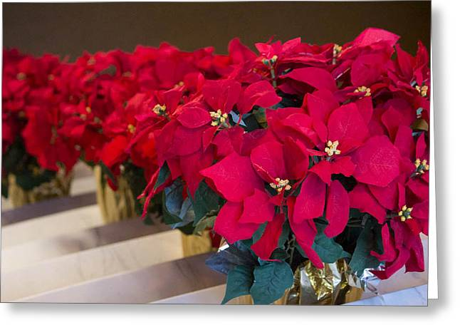 Elegant Poinsettias Greeting Card