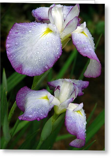 Greeting Card featuring the photograph Elegant Purple Iris by Marie Hicks