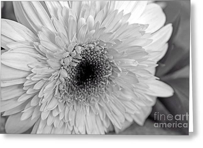 Greeting Card featuring the photograph Elegant Shades Of Gray by Mary Lou Chmura