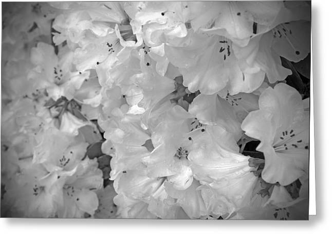 Elegant Soft White Flowers Greeting Card by Tina Wentworth