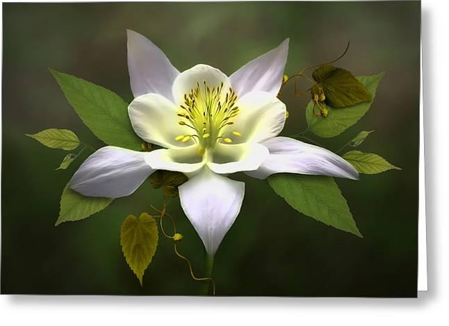 Elegant White Columbine Greeting Card by Nina Bradica