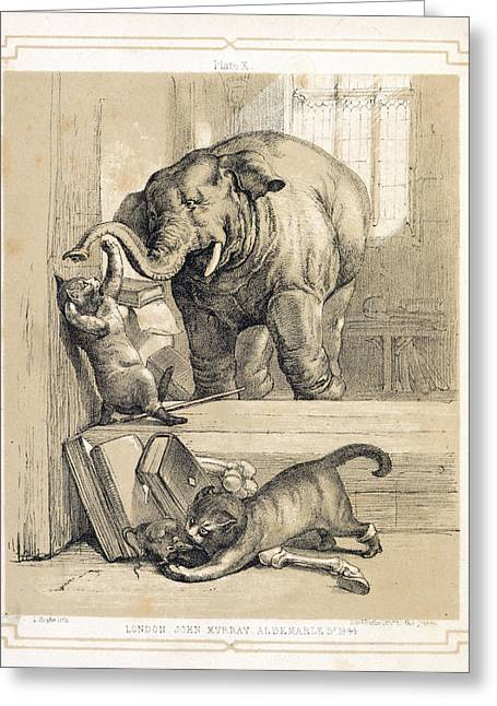 Elephant And Cats Greeting Card