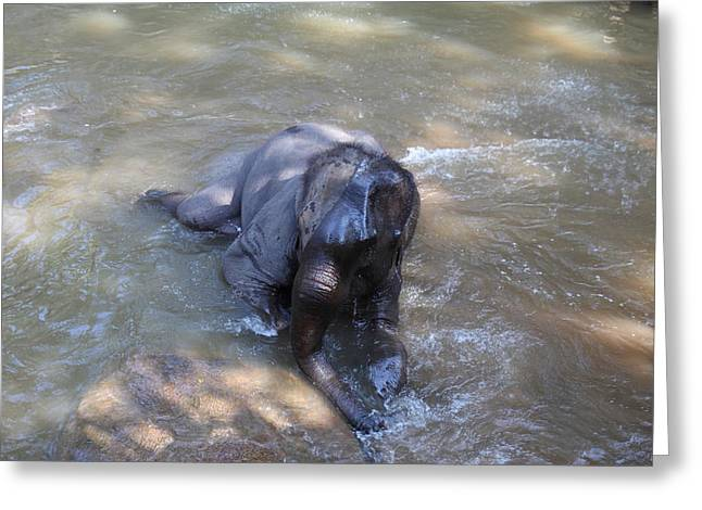Elephant Baths - Maesa Elephant Camp - Chiang Mai Thailand - 011312 Greeting Card by DC Photographer