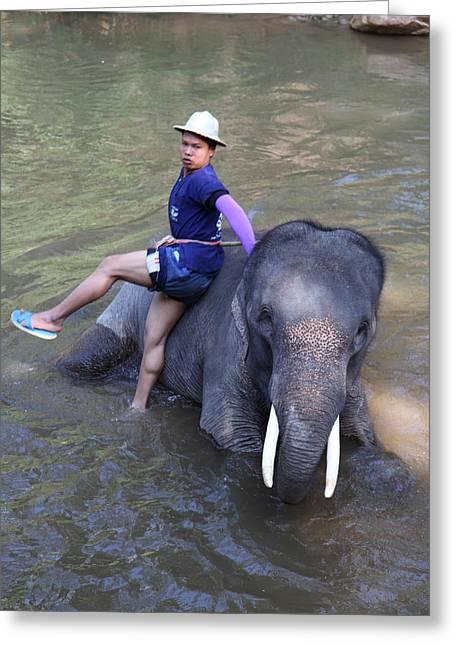 Elephant Baths - Maesa Elephant Camp - Chiang Mai Thailand - 011316 Greeting Card by DC Photographer