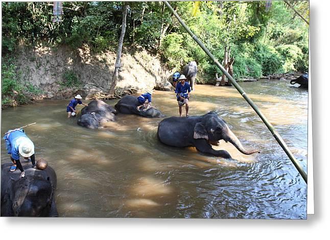 Elephant Baths - Maesa Elephant Camp - Chiang Mai Thailand - 011317 Greeting Card