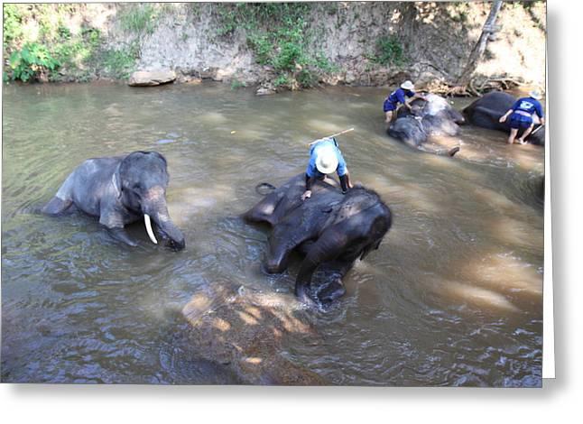 Elephant Baths - Maesa Elephant Camp - Chiang Mai Thailand - 011318 Greeting Card by DC Photographer