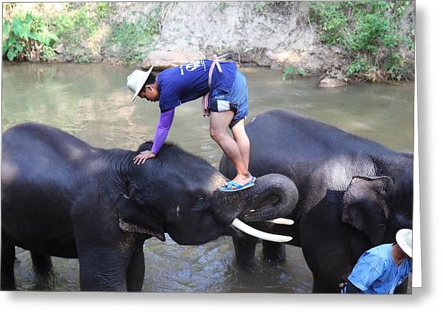 Elephant Baths - Maesa Elephant Camp - Chiang Mai Thailand - 011330 Greeting Card
